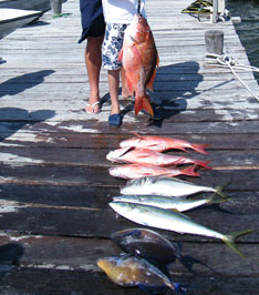 Deep Sea Fishing in Cancun fourth image