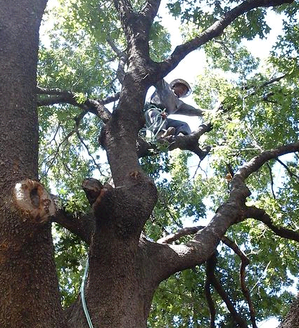 Master Tree Trimming first image