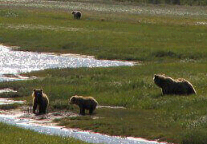 Bear Viewing in Alaska first image