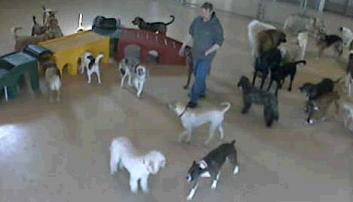 Canine College second image