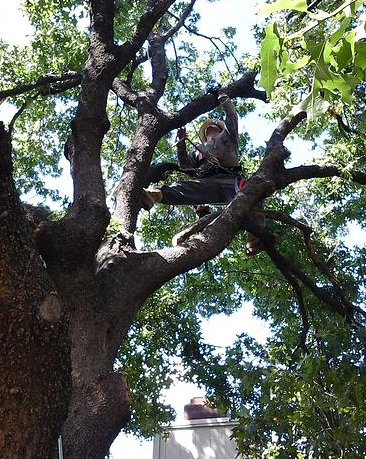 Master Tree Trimming second image