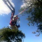 AAA Tree & Shrub care Service third image