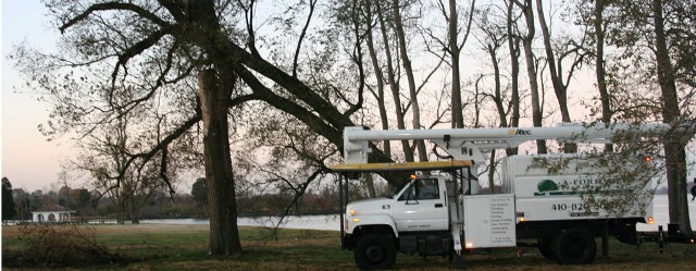 A-Fordable Tree Service first image