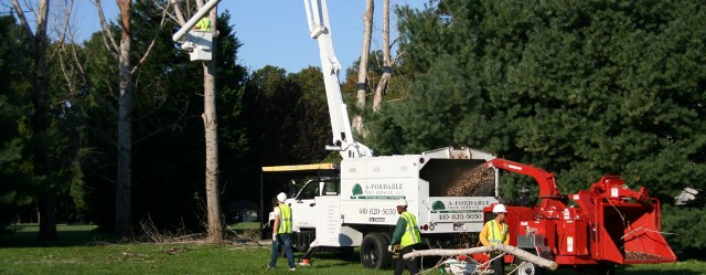 A-Fordable Tree Service second image