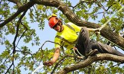 Cortez Tree Care INC third image