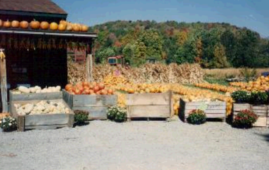 Country Wagon Produce fourth image
