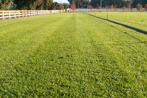 Sydney Lawn and Turf first image