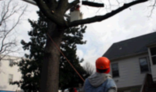 Unlimbited Tree Service Inc. first image