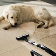 Horizon Carpet Upholstery Tile & Grout Cleaning Service fifth image