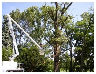Menchhofer Tree Care first image