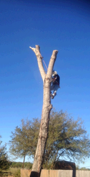 Chuy's Tree Service fifth image