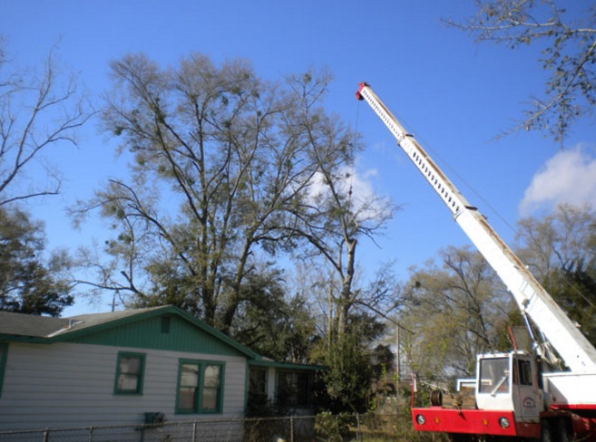Wayne's Tree Service LLC fifth image